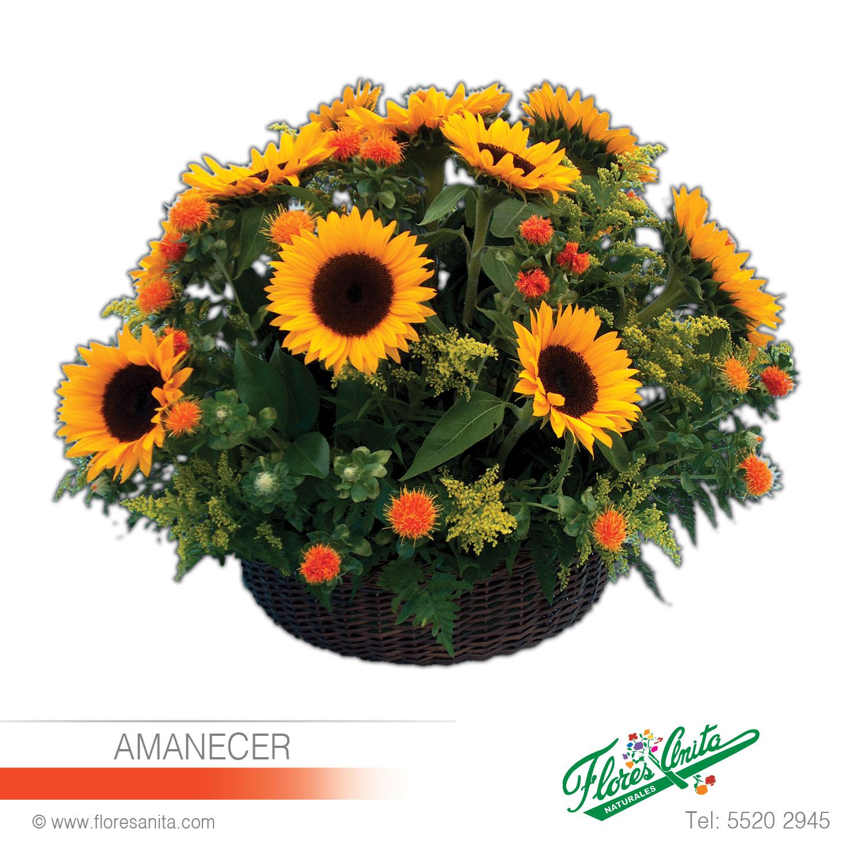 Amanecer Arreglo Floral Girasoles Florería Flores Anita