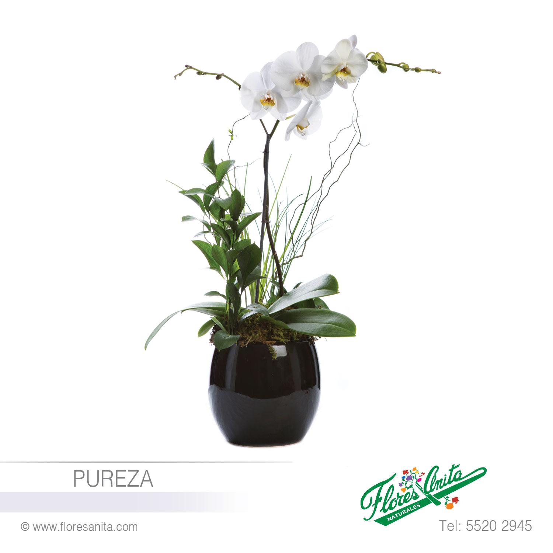 Pureza Arreglo Floral Orquideas Florería Flores Anita