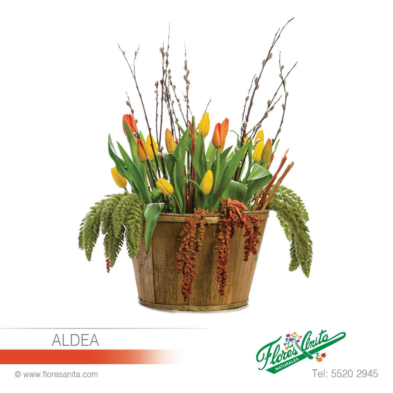 Aldea Arreglo Floral Tulipanes Florería Flores Anita