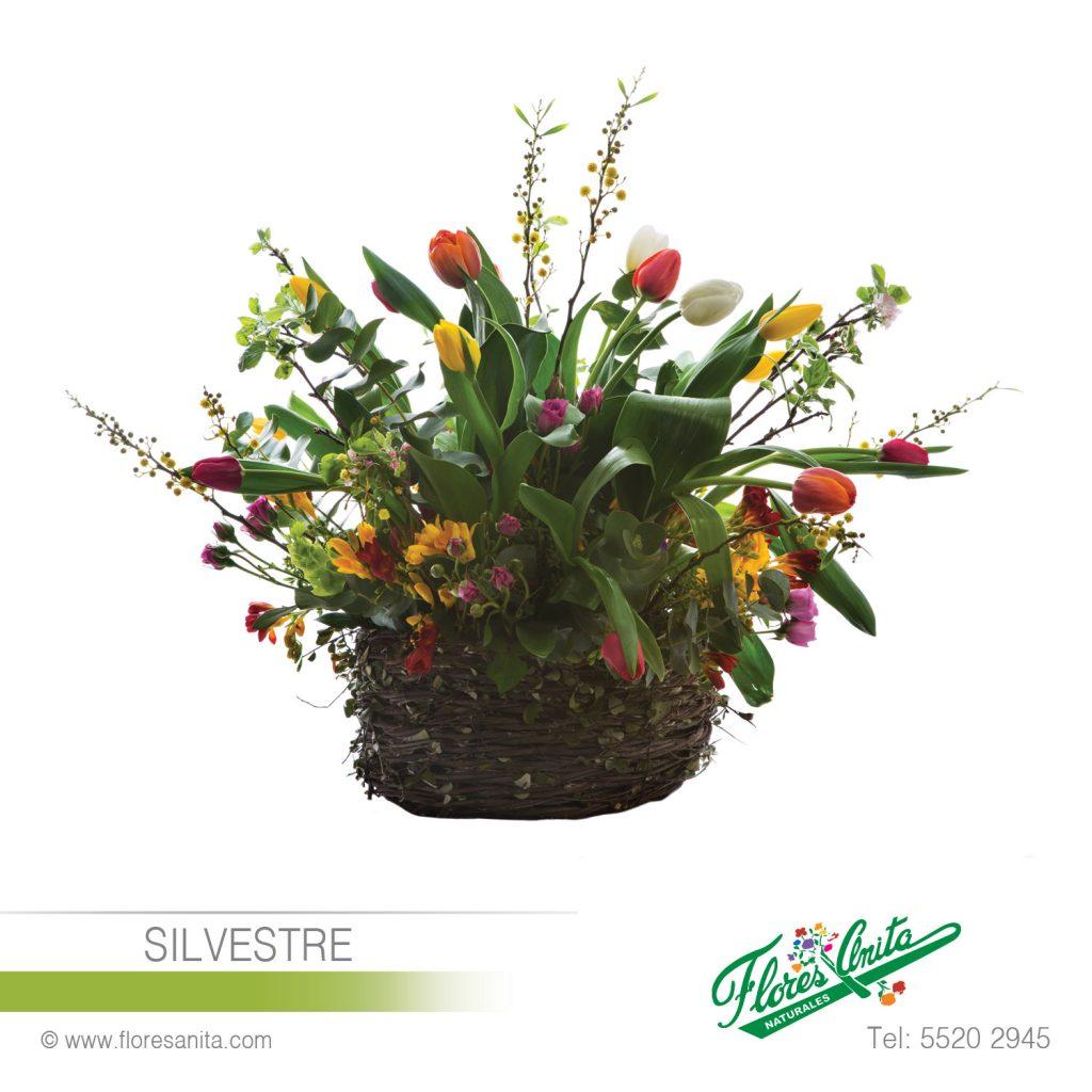 Silvestre Arreglo Floral Tulipanes Florería Flores